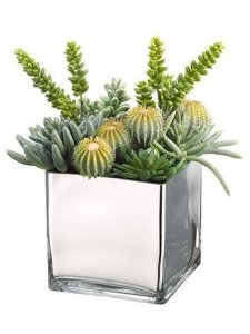 Barrel Cactus/Monkey Tail/Aeonium in Glass Container Green