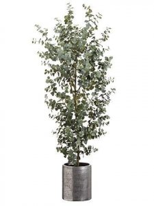 6.5' Eucalyptus Tree in Aluminum Planter Green