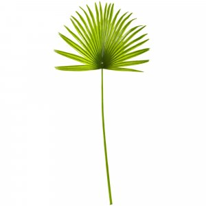 "30"" Fan Palm Leaf - Light Green"