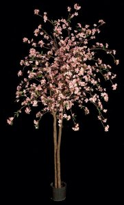 Cherry Blossom Tree - Natural Trunk