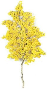 7' Cotton Wood Branch - Natural Wood - Yellow