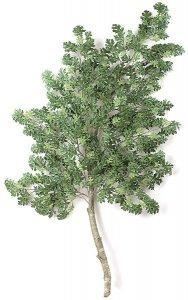8' Pin Oak Branch - Natural Wood - Green - CUSTOM-MADE