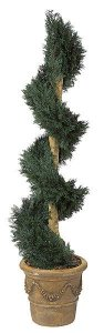 A-884 Custom Made Outdoor Juniper Spiral Topiary