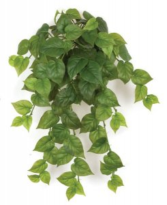 "32"" Philodendron Bush - Soft Touch - 102 Leaves - Green"