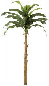 12' Banana Palm Tree - 16 Green Leaves - 1 Bud - Bare Stem
