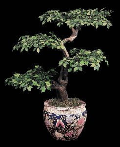 Custom Made Faux Life Like Ming Ficus Bonsai