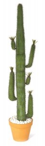 7'-8'  Saguaro with leaves