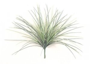 "21"" Plastic Onion Grass-green/gray"