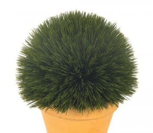 Ball Wheat Grass