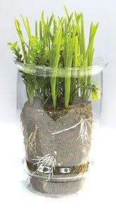 Faux Life Like Plastic Rye Wheat Grass and Glass Vase Green