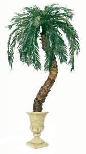 4'-12'  Custom Made Life Like Faux Cycas Palm on Natural Aloe Trunk