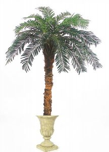 Custom Cycas Palm Tree on natural aloe trunk made in many heights!
