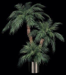W-207   7' , 5' & ..5' Tall Trio Roebellinii Palm Set  with 3 Natural Preserved Aloe Trunks
