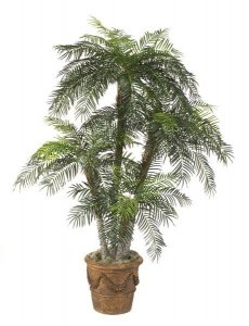 8.5 Foot Phoenix Palm Tree Set