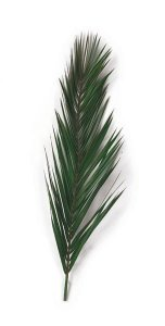 WR-4002 3' Preserved Canariensis Palm Frond  (Set of 5)
