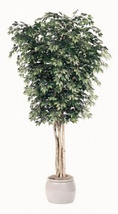 Custom made Giant Ficus Tree Can be made in various heights!