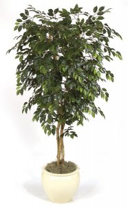 W-2210 Custom Made Ficus Tree Made in various heights!