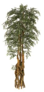 Life Like 9' Faux Ming Aralia Tree