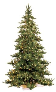 C-9761 15' Nikko Fir Christmas Tree -Full With Lights