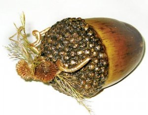 Medium Acorn Sold in a set of 6