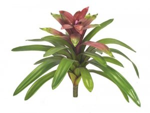 "20.5"" Foam Life Like Tropical Guzmania Plant"