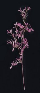 "Purple 25.5"" Length Bamboo Branch Sold Per Dozen"