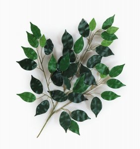 "23"" Length Ficus Branch Sold Per Dozen"