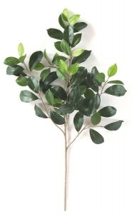"25"" Length Ficus Retusa Branch Sold per dozen"