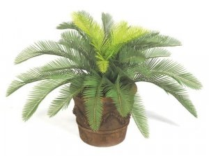 Plastic Cycas Palm Cluster