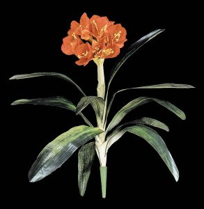 Faux Life Like Tropical Flowering Clivia Plant