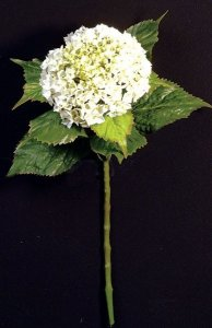 Hydrangea -8 leaves -1 flower -cream/green