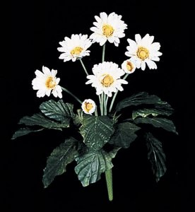 Life Like Flowering Gerbera Daisy Bush White/Yellow