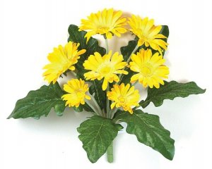 Gerbera Daisy Bush Sold in a set of 6