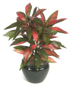 "P-153 34"" Cordyline Plant  Artificial life like Plant"