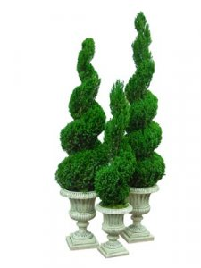 Preserved Spiral Topiary