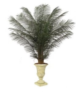 Custom Made 5' & 6' Tall New Areca Palm Bush