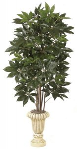 W-2400 Schefflera Tree   Select your size