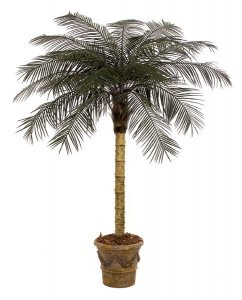 Custom Made  7' Phoenix Palm Tree For Exterior Use