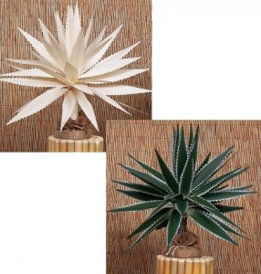 2' Canvas Maguey Plant Natural or Painted