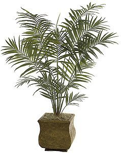 P-2420 Kentia Palm Tree Comes 6' or 8' Tall