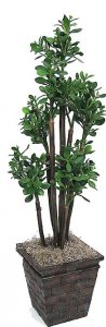 "W-1550 48"" Plastic Jade Plant - Natural Trunks - 768 Leaves - Green - Weighted Base"