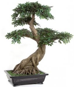 "Life Like Silk 30"" Chinese Elm Bonsai - Synthetic Trunk - 24"" Width - Black Decorative Pot"