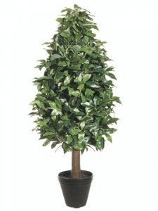 EF-105 Laurel Tree in Black Round Pot
