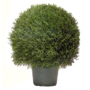 "EF-3338 Cypress Ball in Plastic Pot Indoor/Outdoor(Comes in Two Sizes  20"" and 30"")"