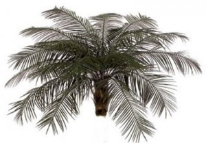 A-0091 Outdoor Phoenix Palm Head Custom Made 18 Fronds OR 24 Fronds