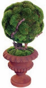 "40"" Preserved Moss Bonsai in Urn"