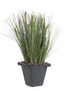 "A-80750 16"" x 6"" PVC Reed/Onion Grass - 800 Green Stems - 7 Reeds - Square Black Iron Pot"