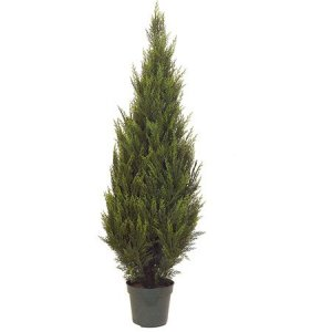 EF-3346 Choose from 5' and 6' Size Pond Cypress Tree in Plastic Pot
