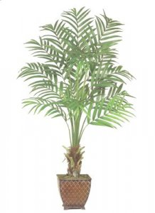 EF-4991 Kentia Palm Tree Choose from 6' and 7' size