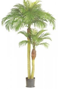 EF-6526 Phoenix Palm Tree With two trunks 4' and 6'